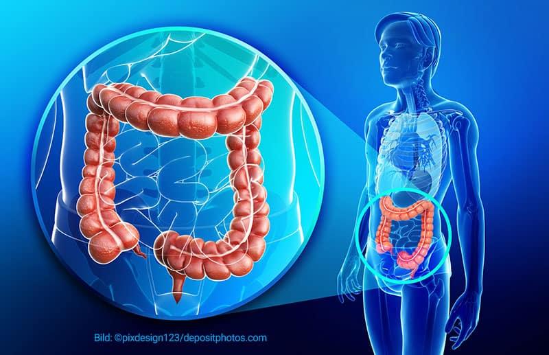 Der Darm als überlebenswichtiges Organ von Anfang bis Ende