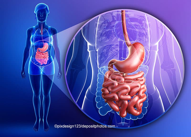 Leaky-Gut-Syndrom